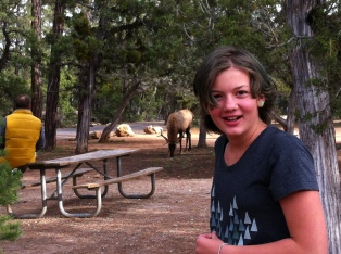 Elk @ the Grand Canyon